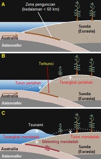 Gambar 6. Kartun sederhana yang menggambarkan dinamika zona subduksi di lepas pantai selatan pulau Jawa. A: zona penguncian dipada subduksi lempeng Australia dan Sunda (Eurasia) dengan kedalaman hingga 60 km dpl. B: jika penguncian terjadi, maka bagian lempeng Sunda (Eurasia), yakni daratan pulau Jawa, akan terangkat naik secara perlahan-lahan. Sementara bagian lepas pantai selatan Jawa akan turun (ambles) juga secara perlahan-lahan. C: jika segmen batuan yang terkunci terpatahkan akibat tak kuat lagi menahan besarnya tekanan, maka daratan pulau Jawa akan turun (ambles) mendadak hingga beberapa puluh sentimeter. Sebaliknya lepas pantai selatan Jawa akan terangkat naik mendadak hingga beberapa meter. Akibatnya air laut diatasnya terdorong hebat hingga membentuk tsunami. Sumber: Natawidjaja, 2007 dengan adaptasi seperlunya.