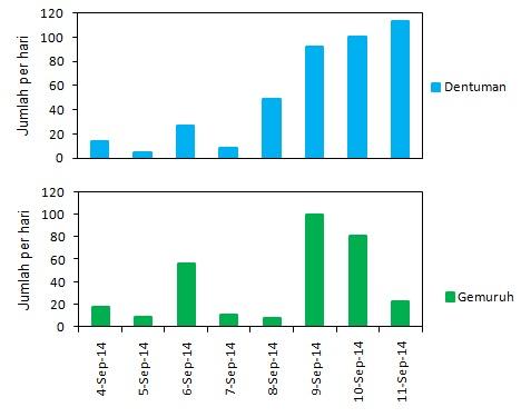 Gambar 5. Grafik jumlah suara dentuman dan gemuruh pada letusan Gunung Slamet per hari dalam periode 4 hingga 11 September 2014. Nampak jumlah suara gemuruh dan dentuman yang terdeteksi pada rentang waktu 9 hingga 11 September 2014 lebih besar ketimbang sebelumnya. Sumber: Sudibyo, 2014 berdasarkan data PVMBG, 2014.
