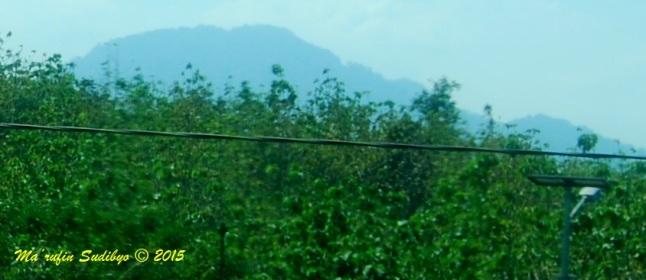 Gambar 6. Gunung Pandan dari kejauhan, diabadikan dari tepi jalan raya Caruban-Ngawi. Gunung Pandan merupakan salah satu gunung berapi tua Jawa Timur yang memiliki potensi panas bumi, meski belum diselidiki lebih lanjut dari sisi geologi, geofisika dan geokimia. Sebagai gunung berapi tua, Gunung Pandan tidak memiliki tanda-tanda aktivitas vulkanik. Sumber: Sudibyo, 2015.