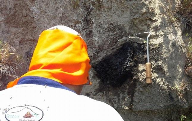 Gambar 8. Batang kayu yang telah mengarang (menjadi arang) di dalam singkapan pasir yang adalah endapan awan panas Letusan Samalas 1257, tersingkap di tepi sungai Luk, pulau Lombok bagian utara. Proses pengarangan batang kayu ini terjadi bersamaan dengan terjangan awan panas Letusan Samalas 127 yang bersuhu tinggi. Arang ini dijumpai dalam ekspedisi Badan geologi ke Gunung Rinjani pada 2014 TU silam. Sumber: Oki Oktariadi, 2014, komunikasi pribadi.
